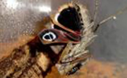 farfalle spaventose